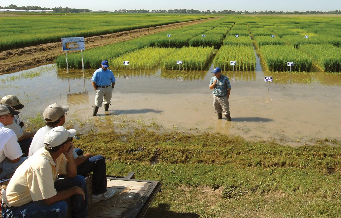 Pre-flood Nitrogen Applications in Rice
