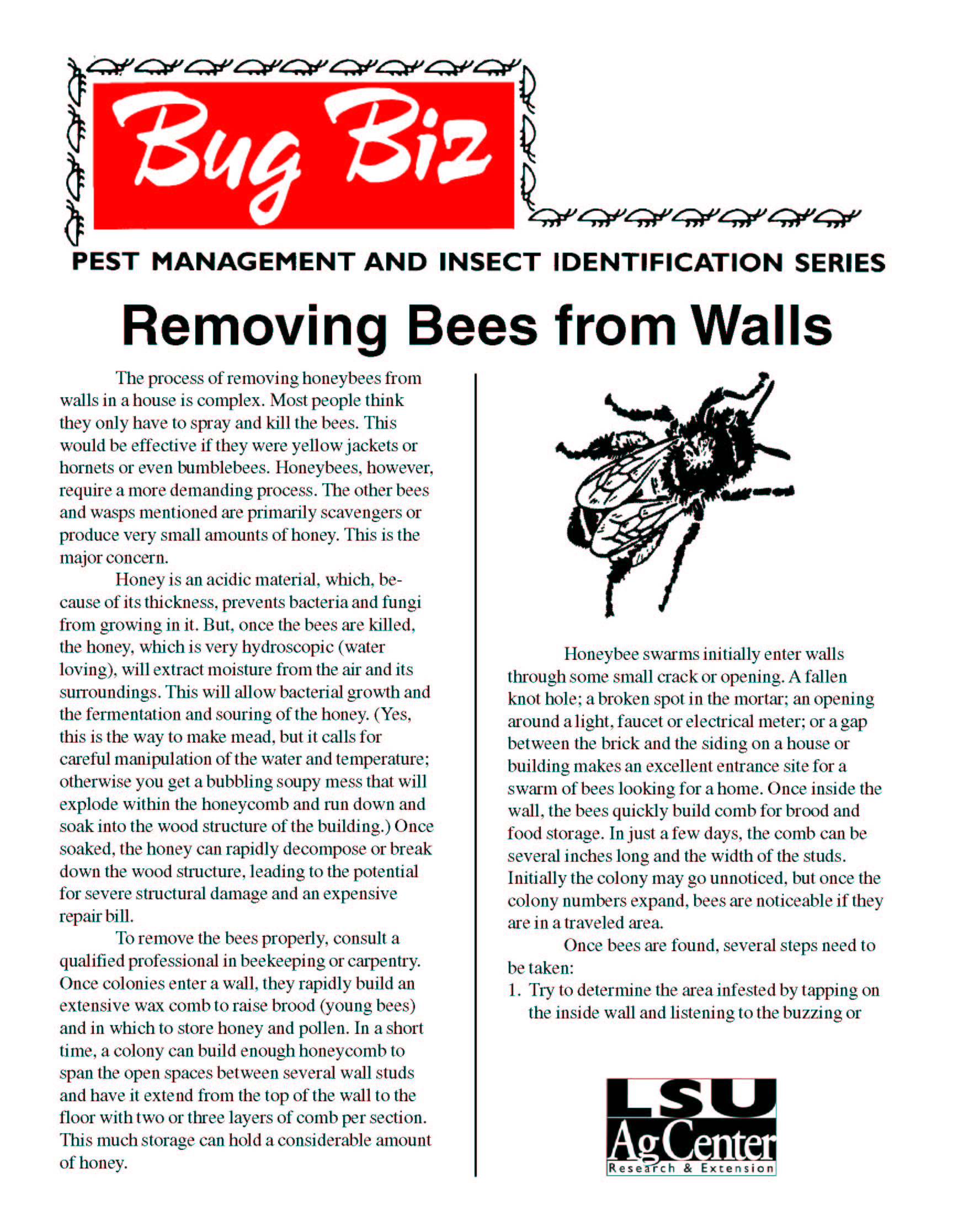 Bug Biz: Removing Bees From Walls