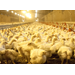 Use of Broiler Litter in Electricity Production and Resulting Economic Impacts