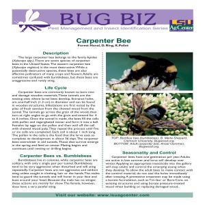 Bug Biz: Pest Management and Insect Identification Series - Carpenter Bee
