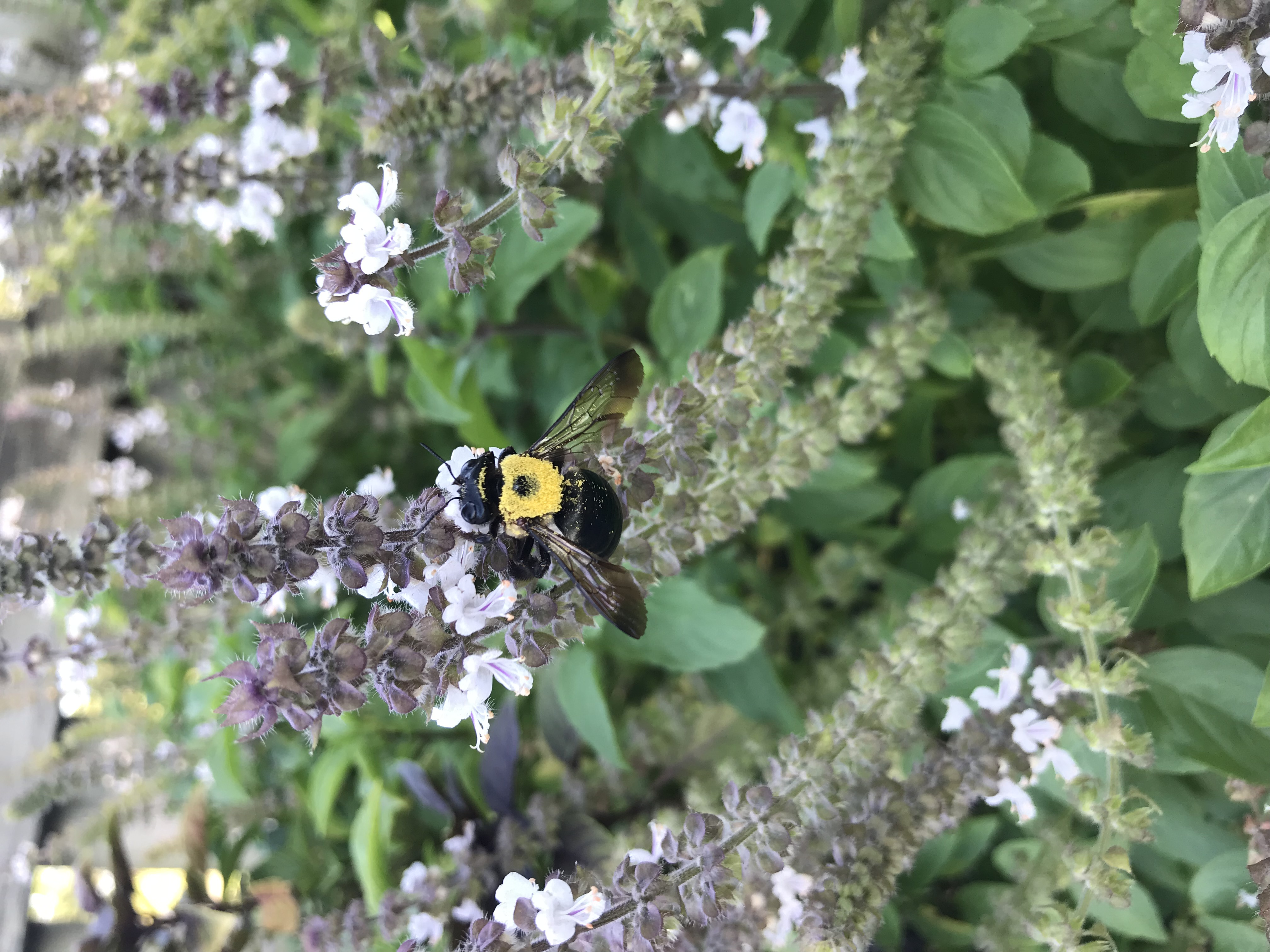 Bee on a vine.