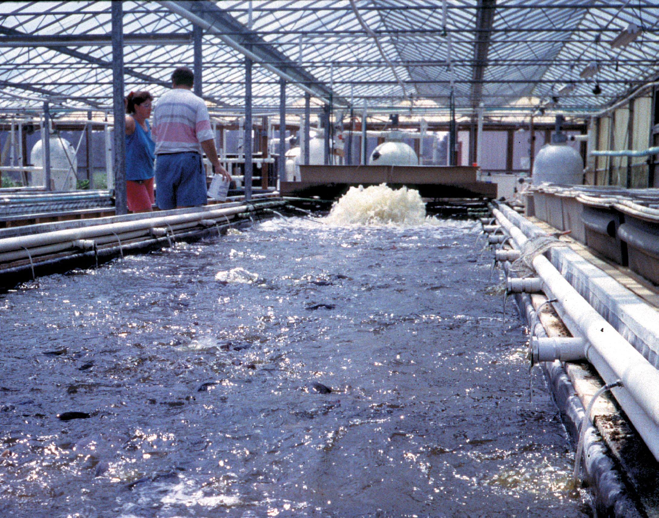 New Disease Problems Continue to Arise in Aquaculture Industry