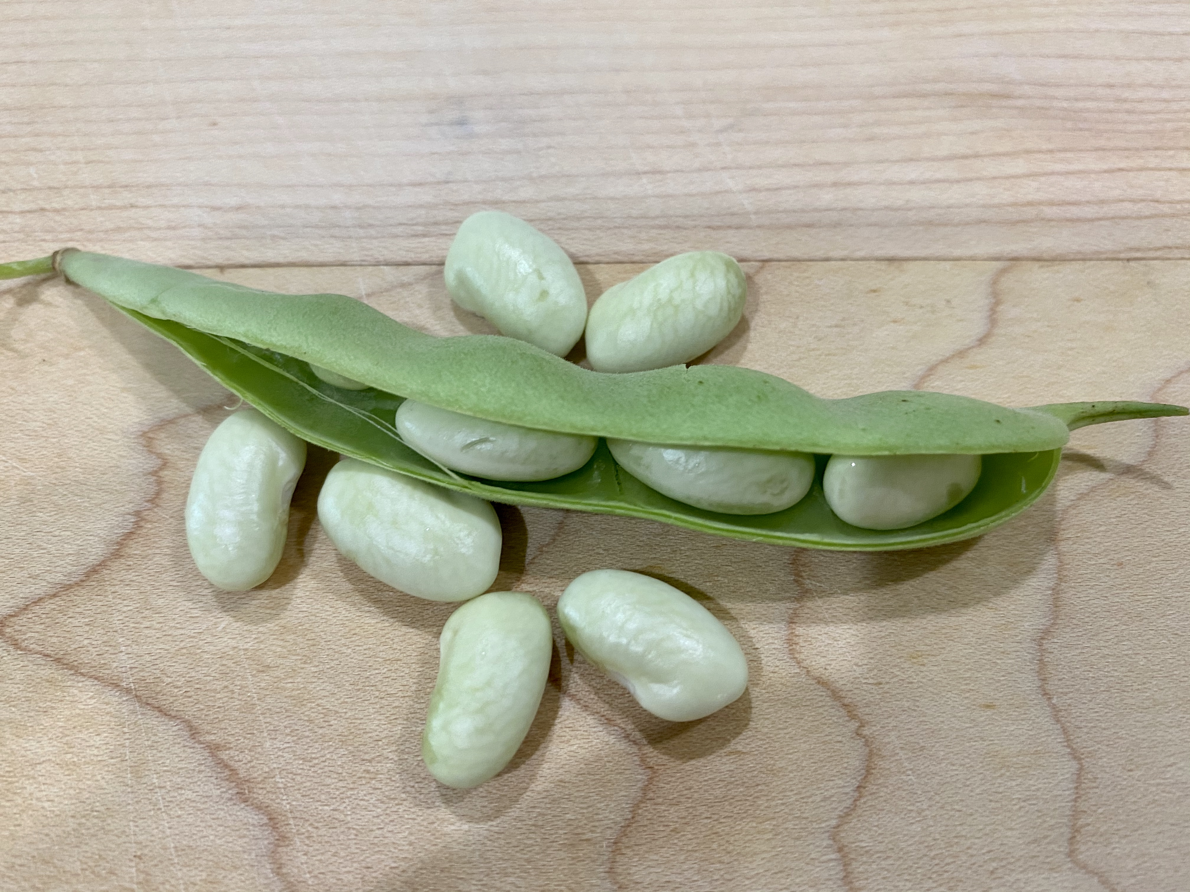Beans take up to 6 weeks to air dry.jpg thumbnail