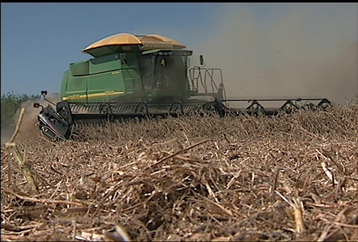 Soybean harvest starts with low yields