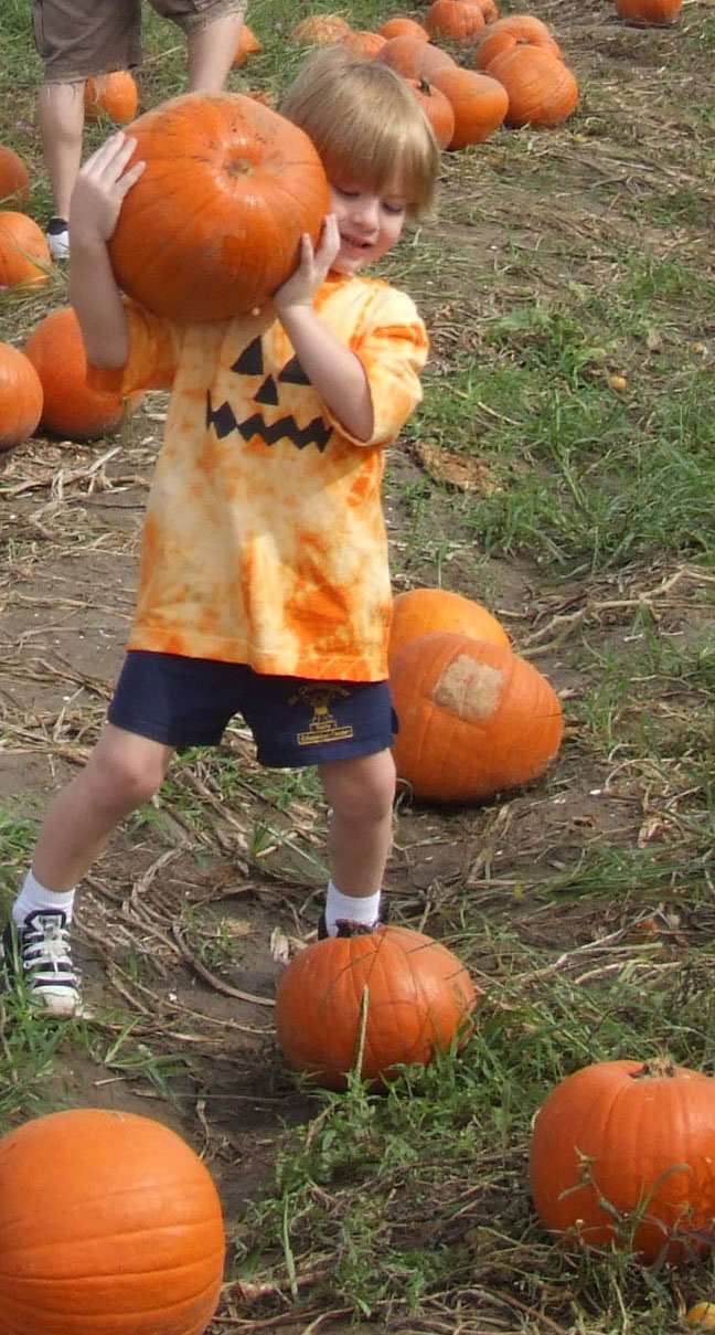 Pumpkin Patch Proves Popular For Vegetable Farmer