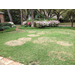 Large patch disease on the rise in Louisiana lawns
