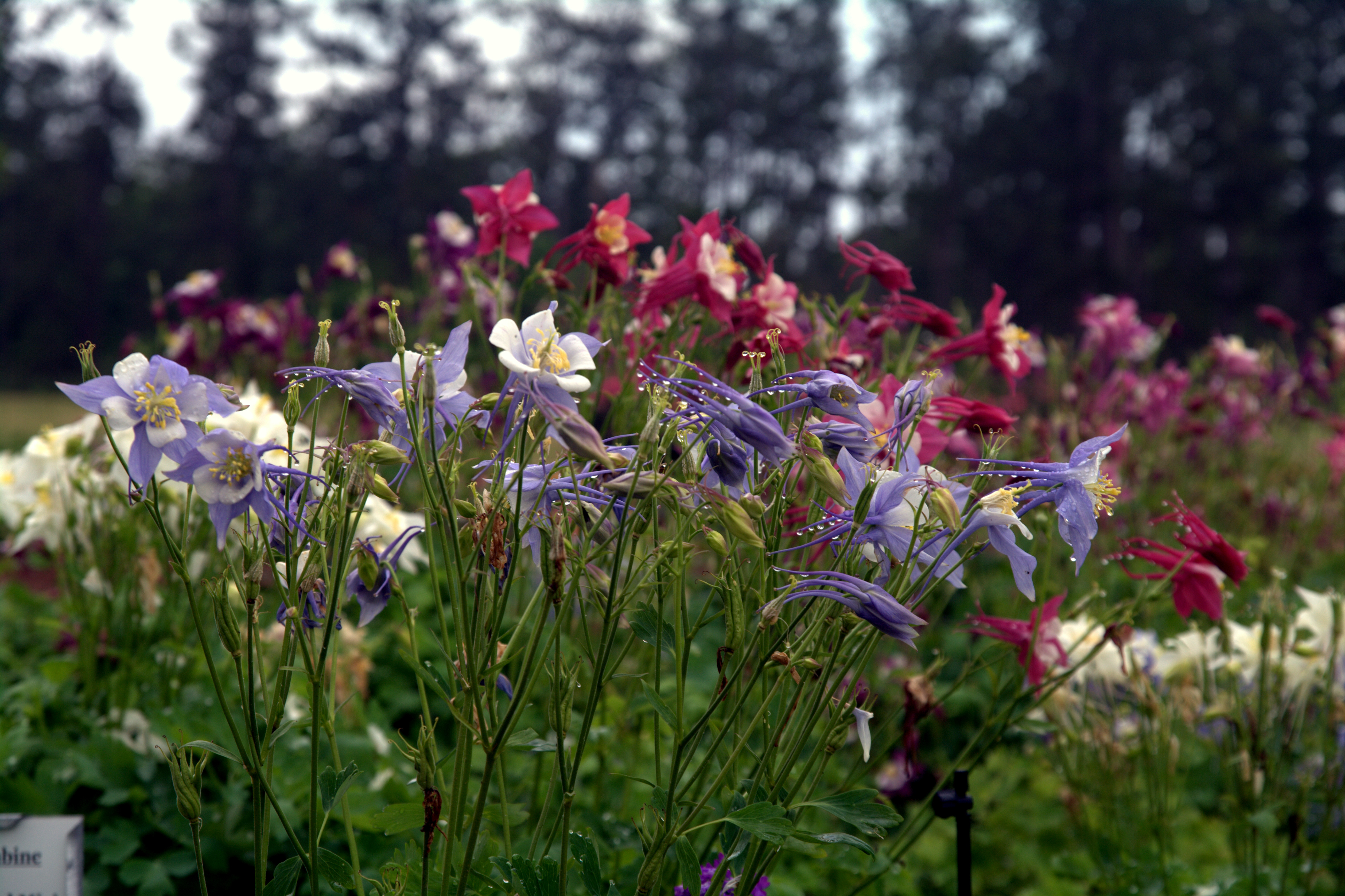 Enhance your landscape with Louisiana Super Plants