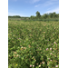 AgCenter research focuses on pollinator, forage relationships