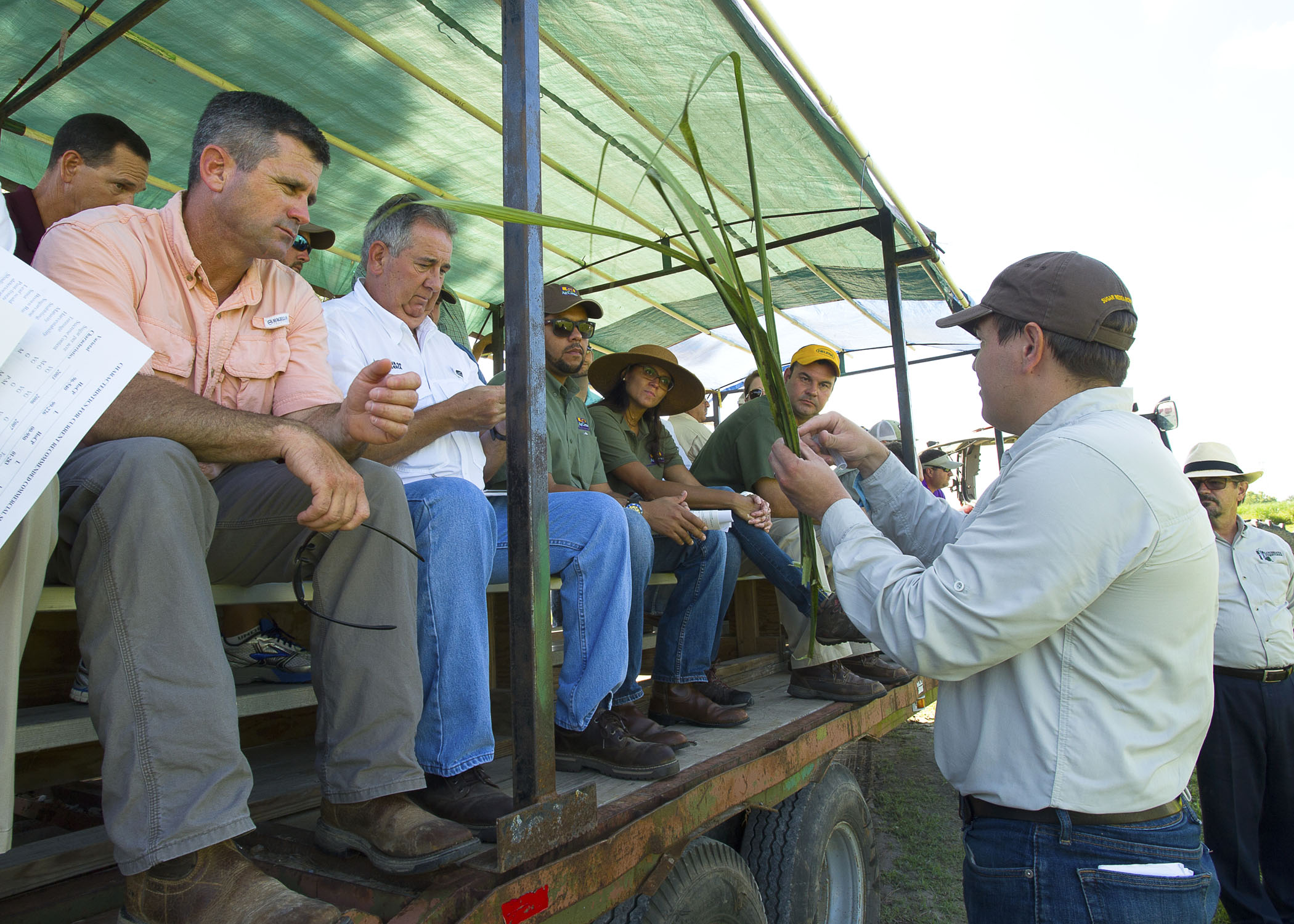 Infrequent insect, new weed highlight sugar field day