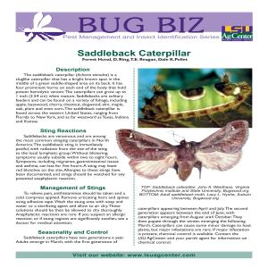 Bug Biz: Pest Management and Insect Identification Series - Saddleback Caterpillar