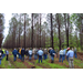 Improved pine trees featured at Hill Farm Research Station event