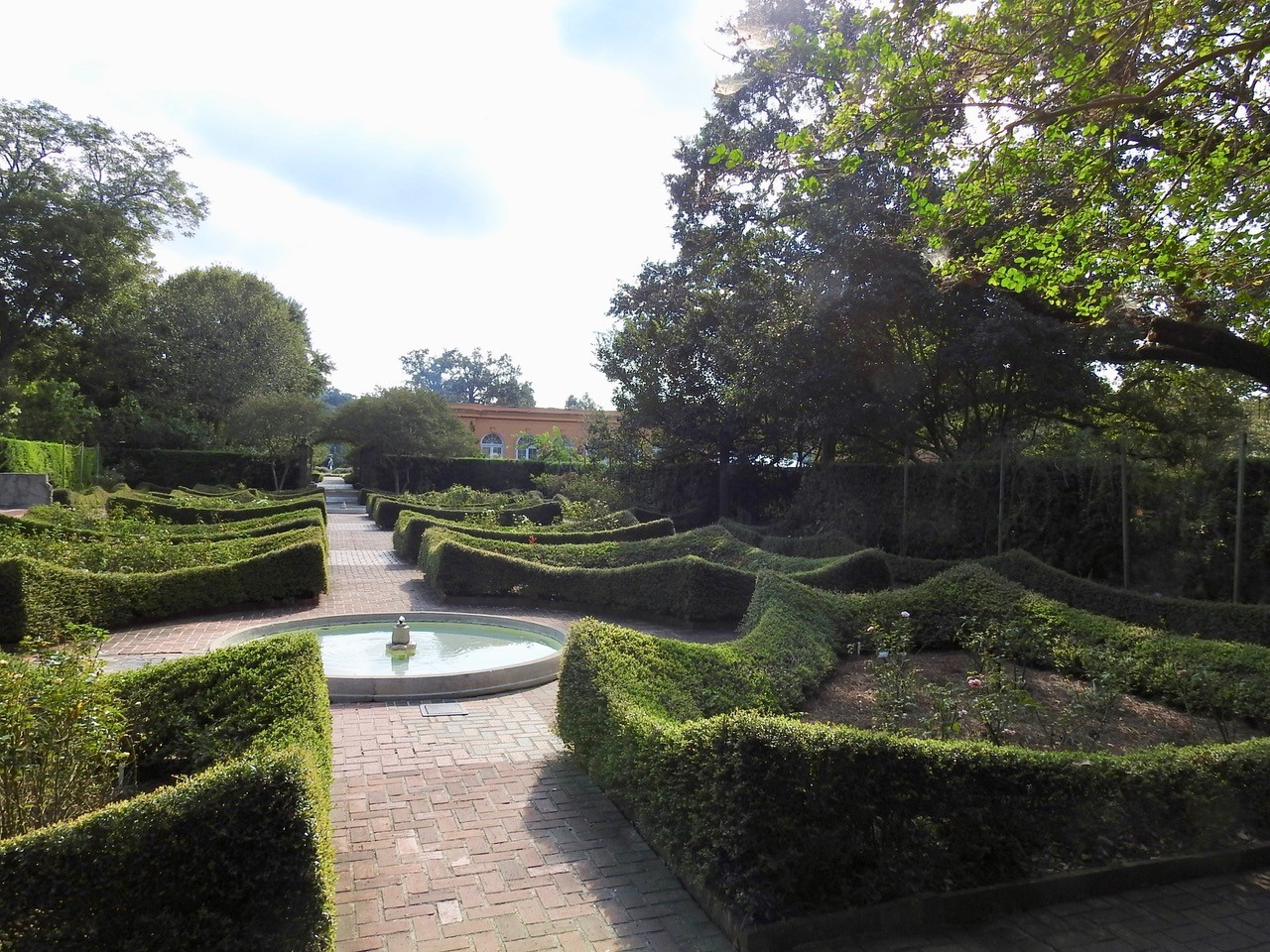 Yaupon holly can be trained as hedges in a formal gardens as a sutible replacement for litlleleaf boxwood-picture credit to Tammany Bumgarten.jpg thumbnail