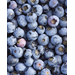 Try Rabbiteye Blueberries