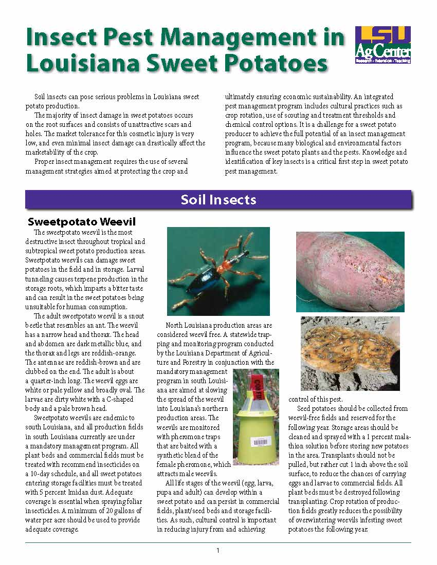 Insect Pest Management in Louisiana Sweet Potatoes