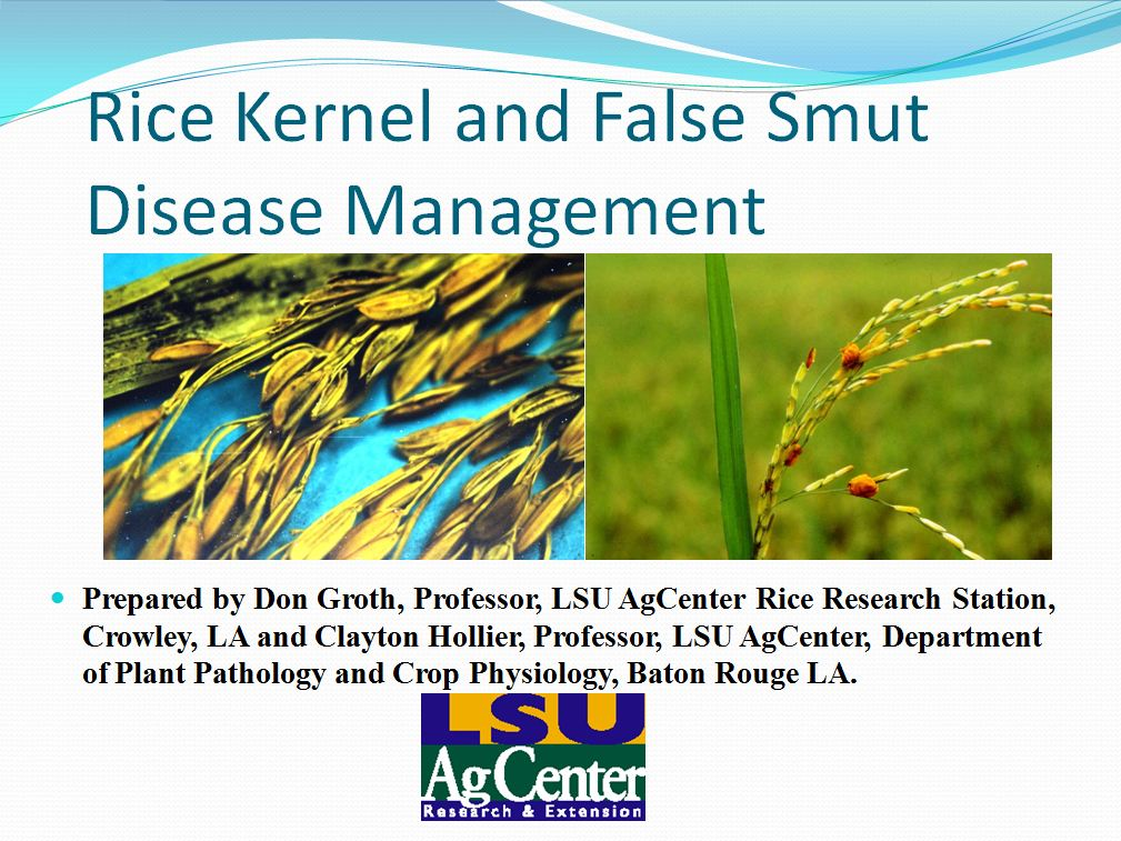 Rice Kernel and False Smut Disease Management 2013