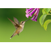 Summer Gardening for Wildlife