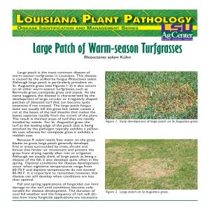 Large Patch of Warm-season Turfgrasses