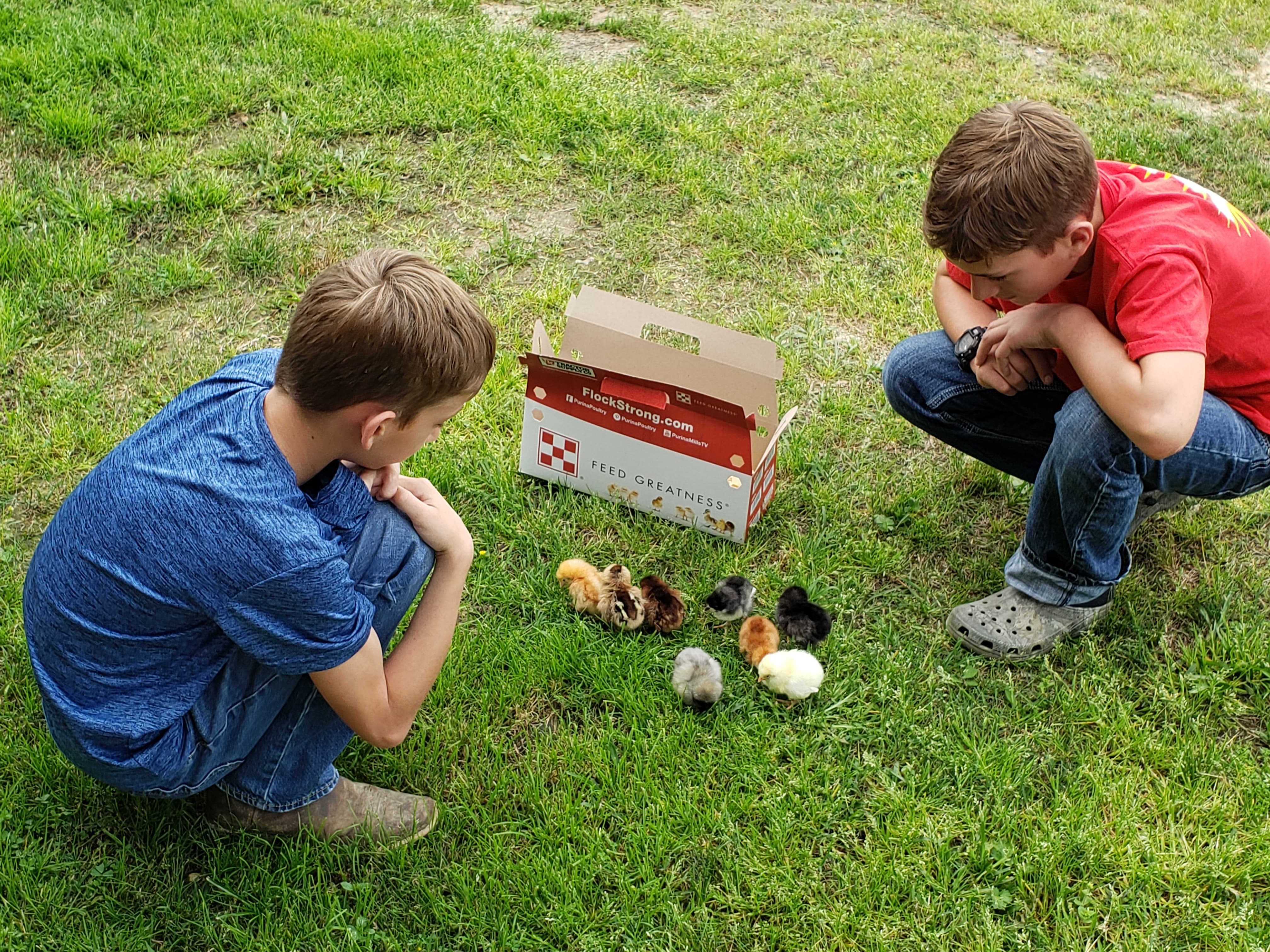 Harvey, left, and Henry Prejean, 4-H members in Allen Parish, admire chicks they're raising.