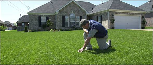 Poll Takes Pulse of Home Lawn Care