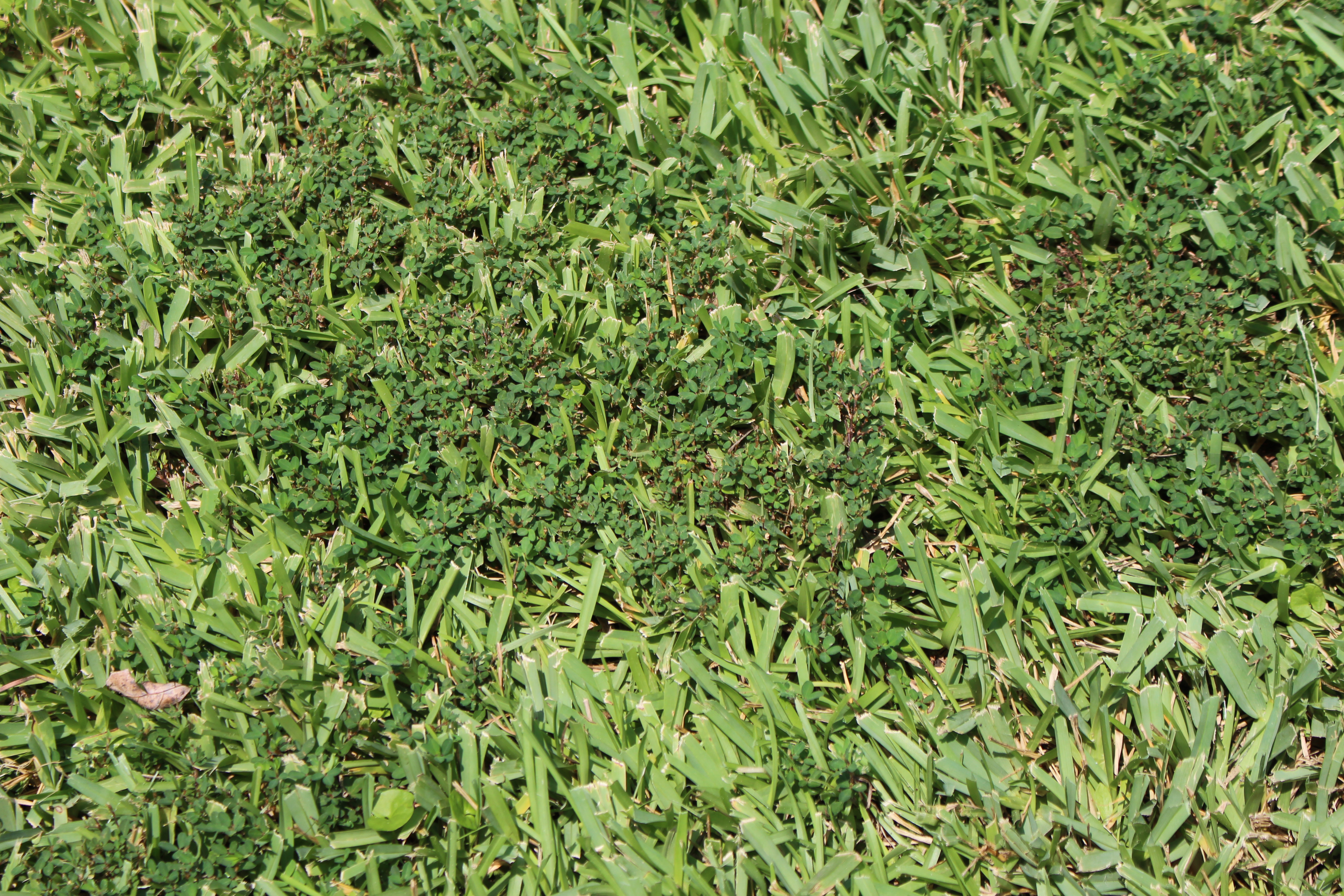 Lawn Weed Problem