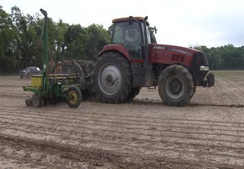 Wet conditions may affect soybean yield
