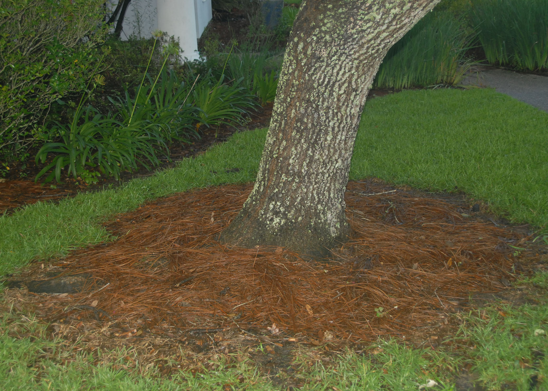 mulch replaces ground cover.jpg thumbnail