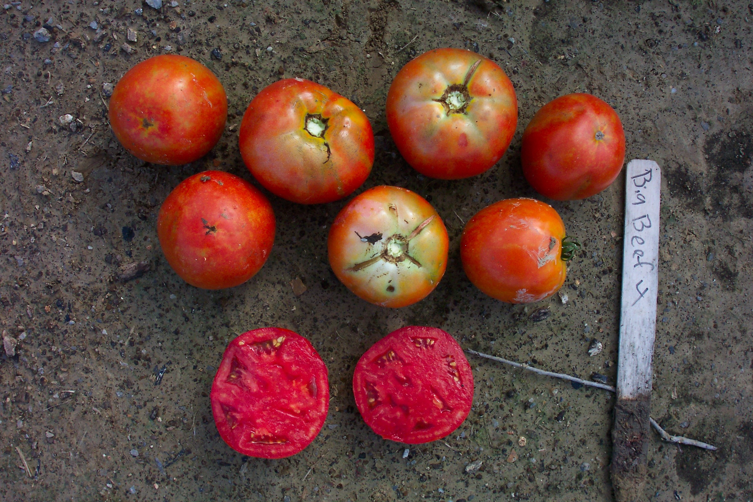 Performance of Thirteen Homeowner Tomato Varieties in the Summer of 2007