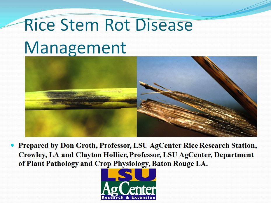 Rice Stem Rot Disease Management 2012