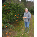Citrus trees should survive recent freezes, experts say