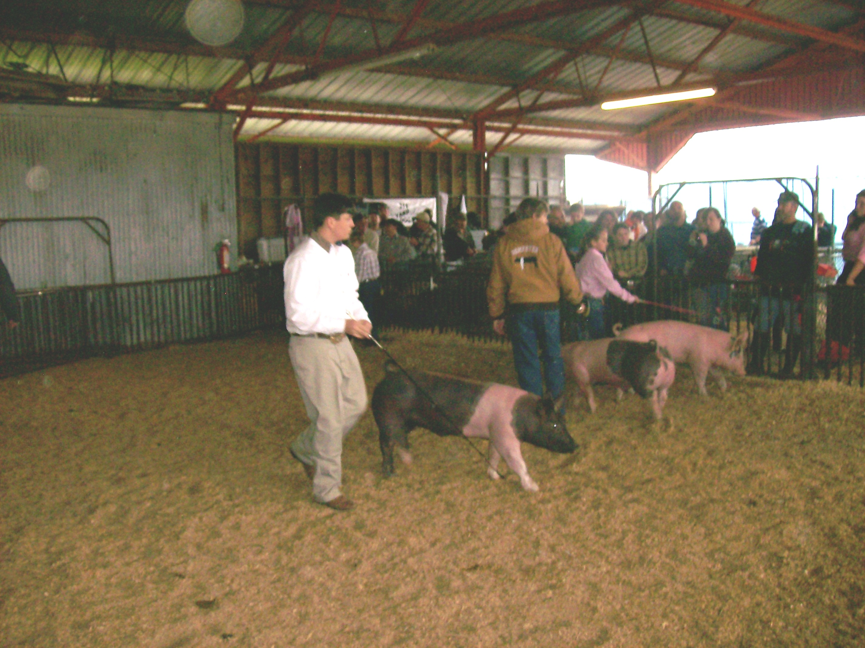 Junior Livestock and Rabbit Show and Ground Beef Cookery