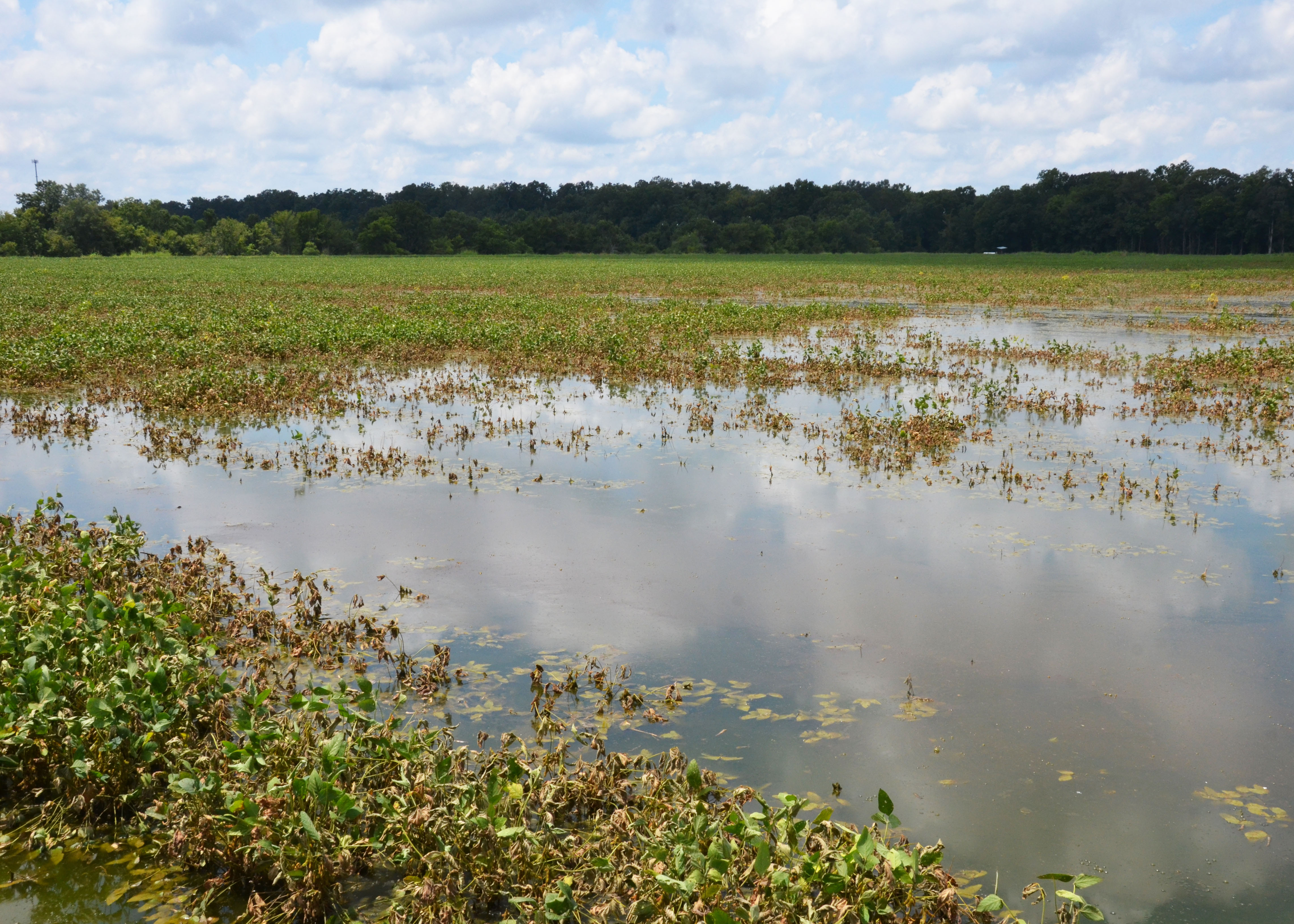 Rice, soybeans take hit from recent flooding