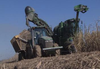 Farmers wrap up sugarcane harvest