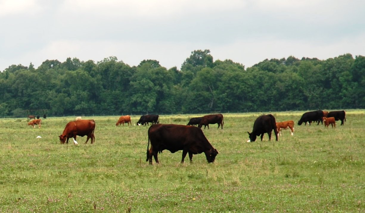 Master Cattleman program to be held in Amite