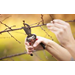 Dormancy and Pruning
