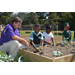 LSU AgCenter partnerships promote gardening, health in northeast La.