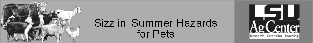 Sizzlin Summer Hazards for Pets 2.png thumbnail