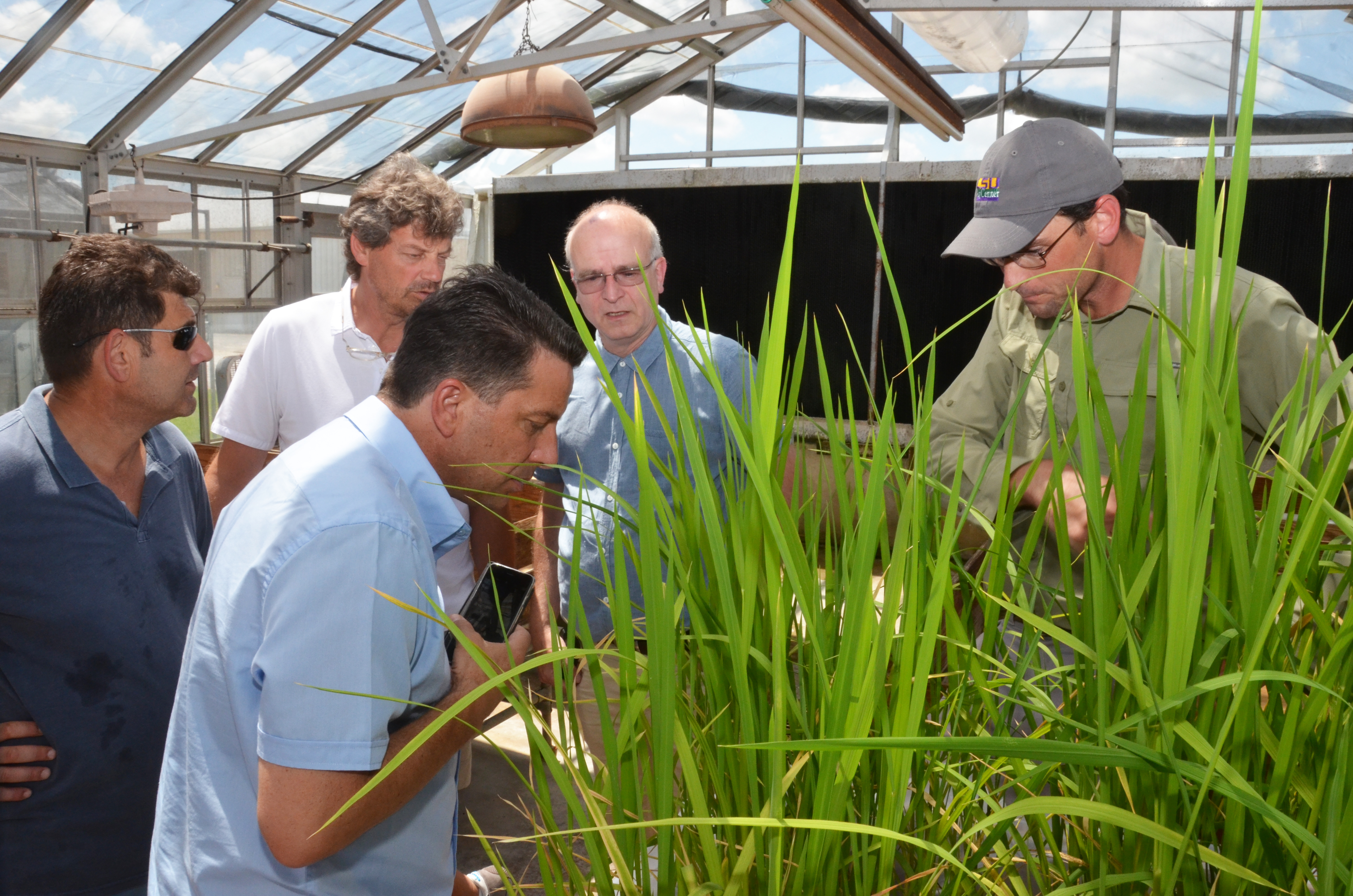 AgCenter research station hosts representatives of Italian seed company