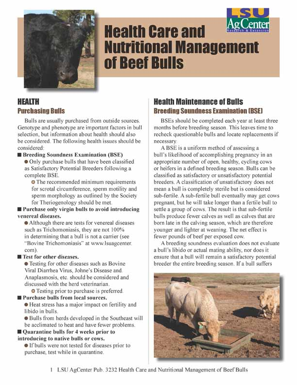 Health Care and Nutritional Management of Beef Bulls