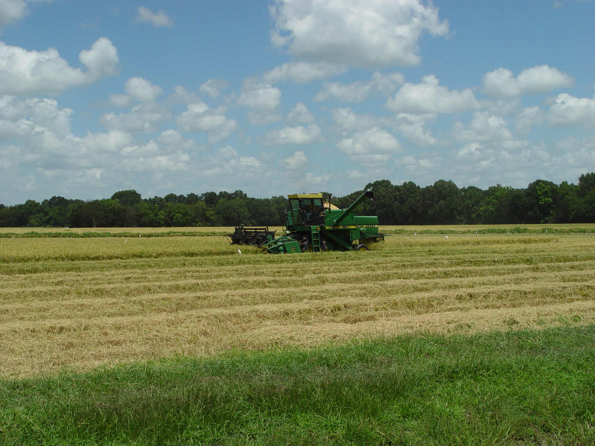 2007 Rice Crop Review