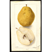 Choose a Pear Variety Suited to Our Climate