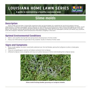 Louisiana Home Lawn Series: Slime molds