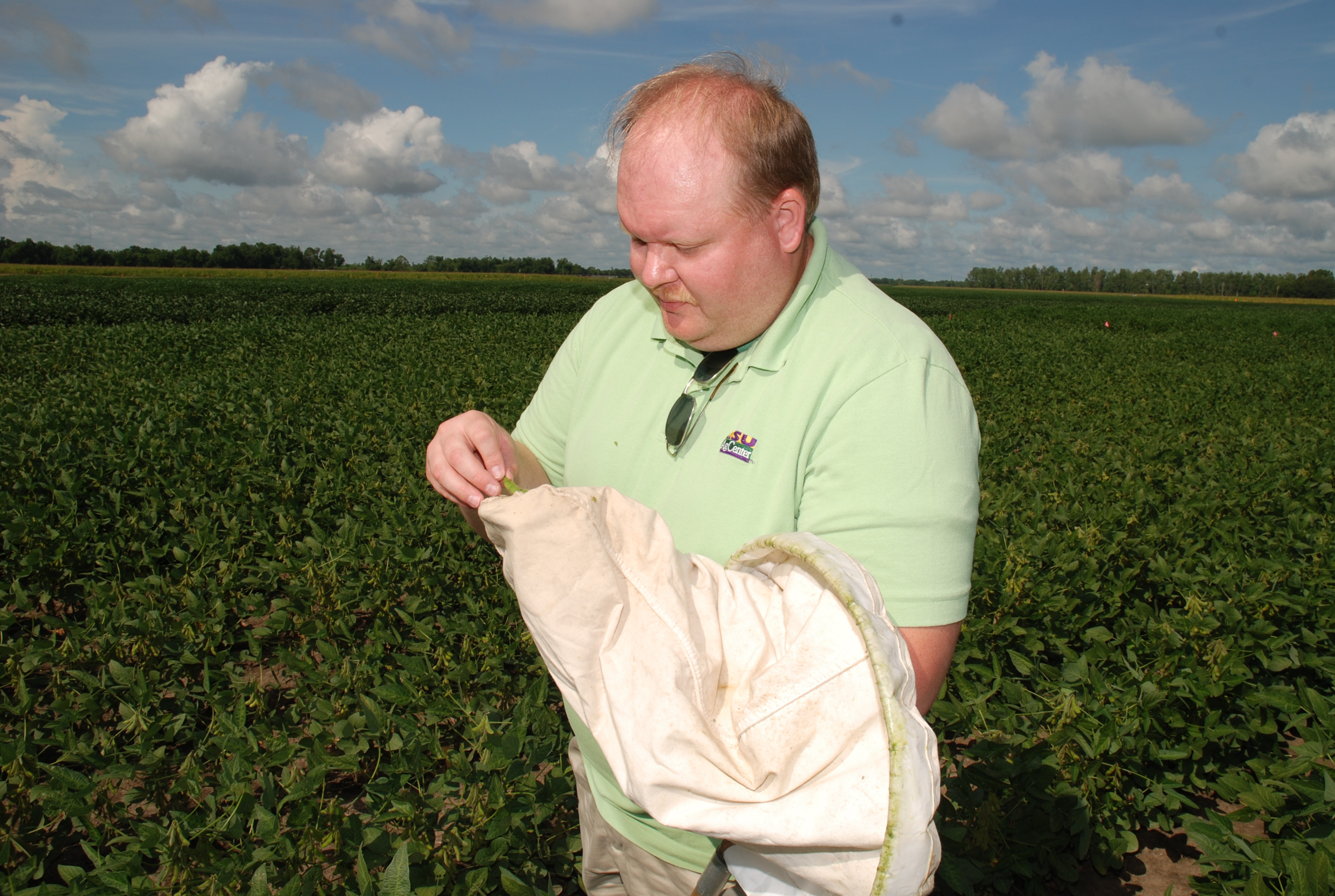 Jeff Davis scouting for stink bugs