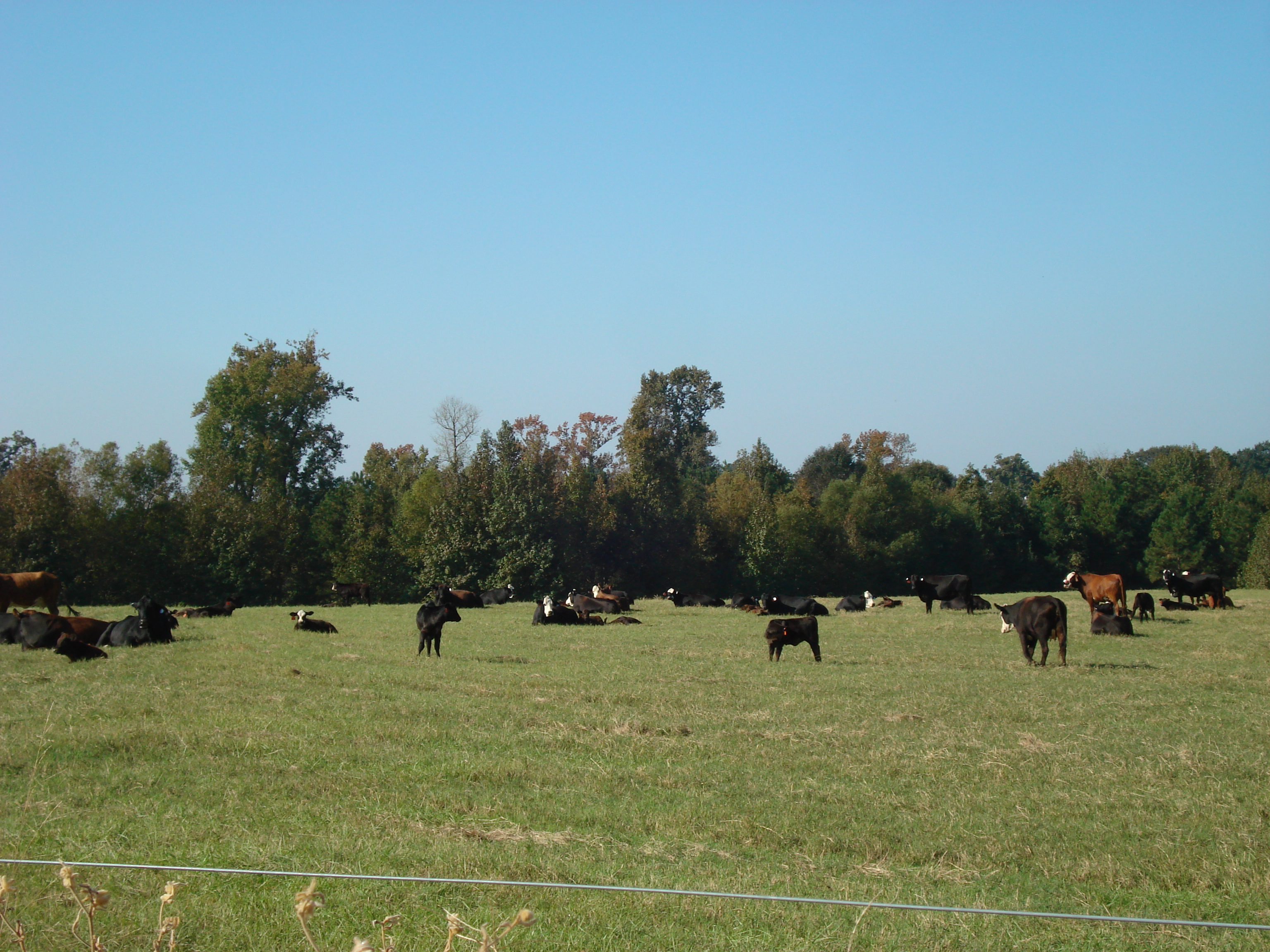 Louisiana forage, grasslands meeting set for Dec. 2 in Alexandria