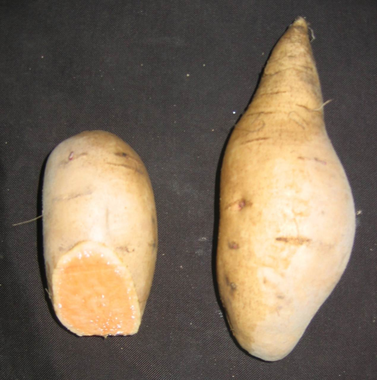 Two sweet potatoes with tan skin. One has end cut revealing deep orange flesh.
