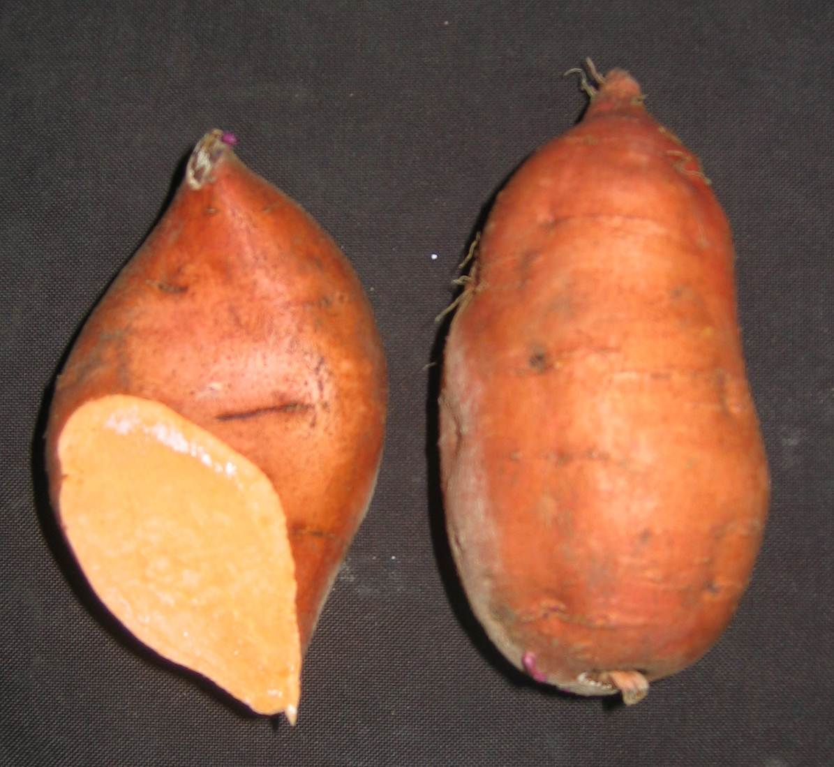 Two sweet potatoes with dark copper skin. One has end cut revealing orangeflesh.
