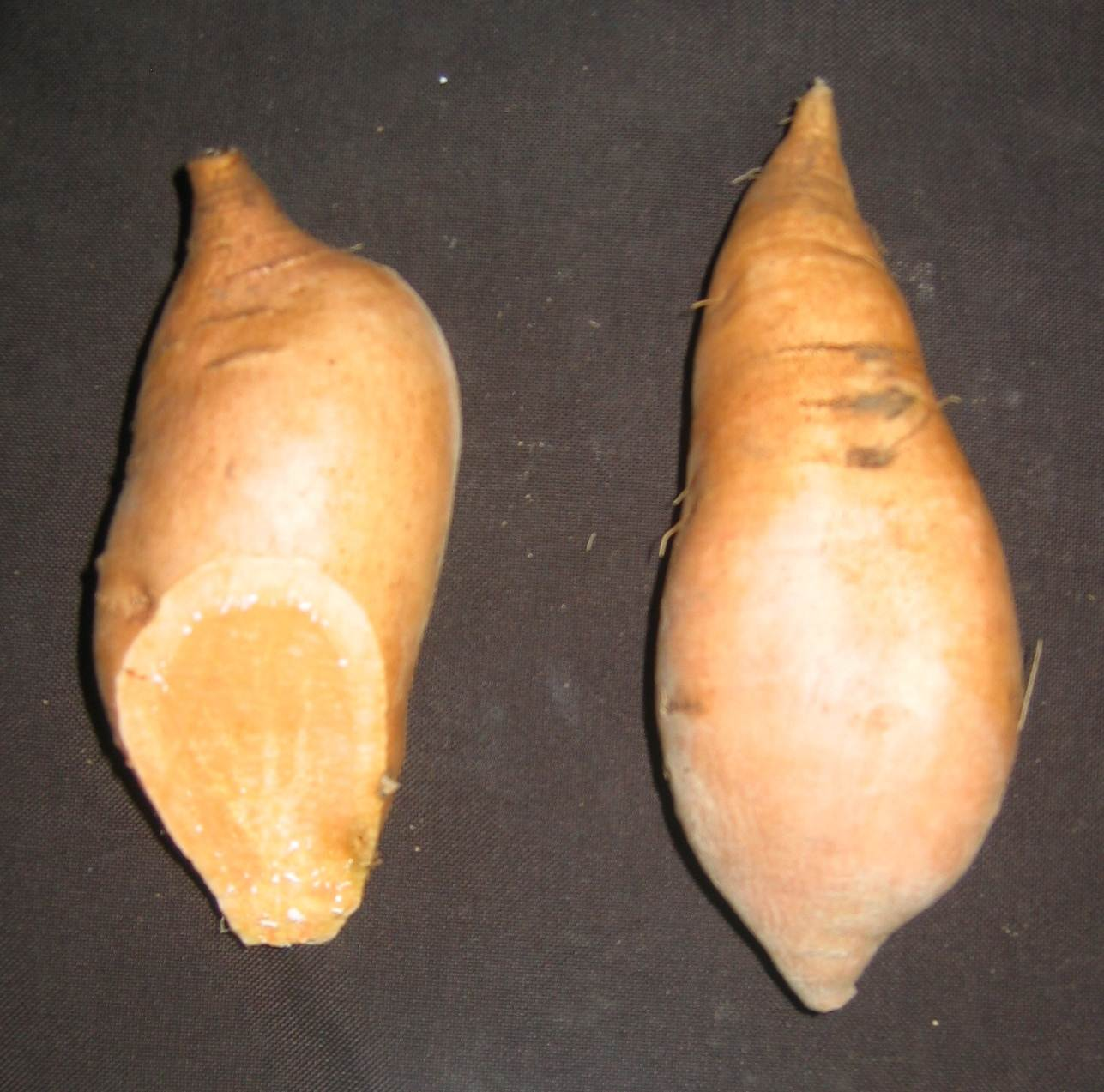 Two sweet potatoes with copper skin. One has end cut revealing salmon-colored flesh.