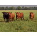 USDA grant to aid grass-fed beef study