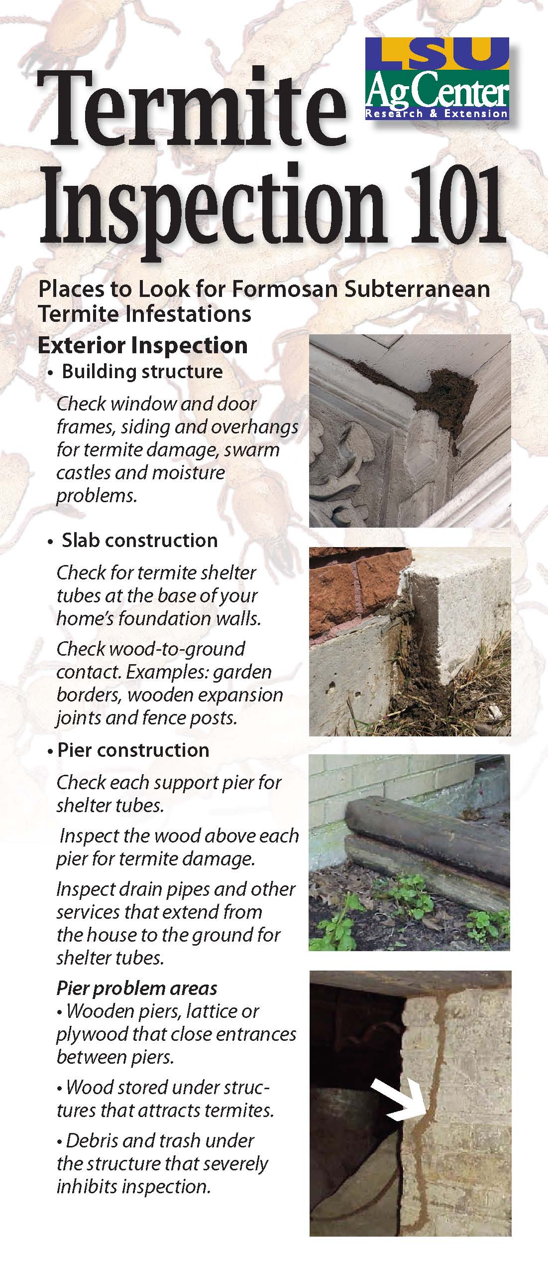 Termite Inspection 101