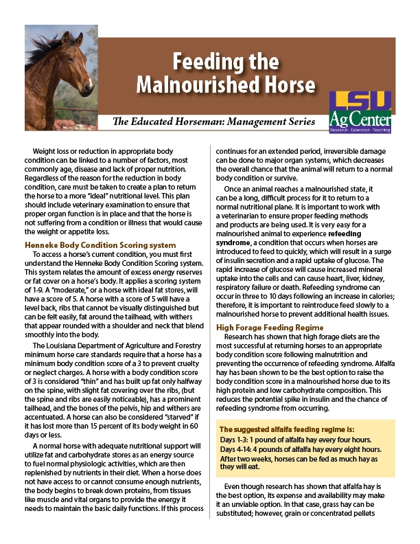 Feeding the Malnourished Horse
