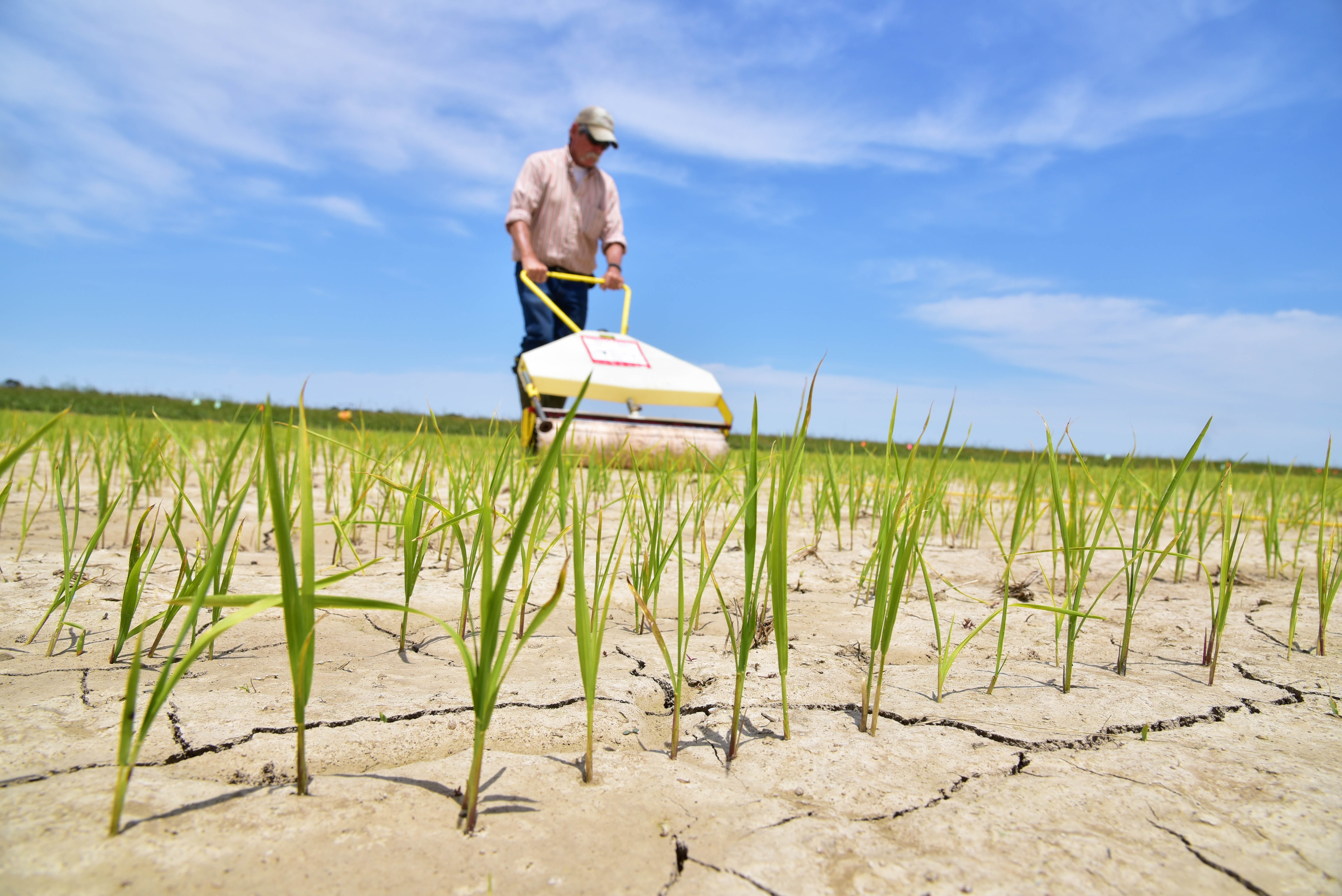 Cool weather delays spring crops